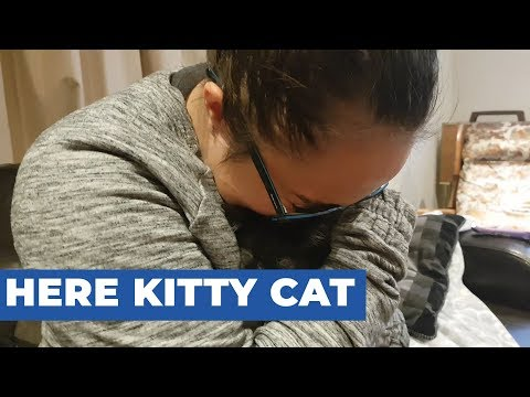 Girl Overjoyed After Mom Surprises Her With Kittens