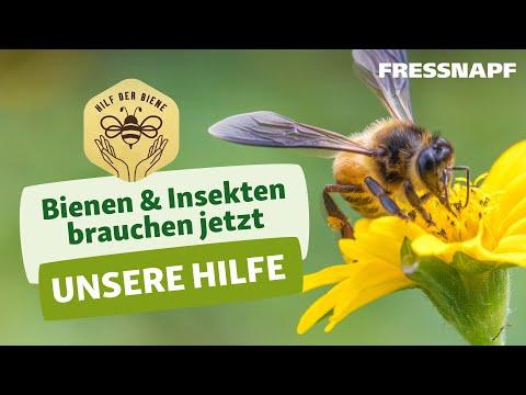 Hilf der Biene - Was wir für den Insektenschutz tun können