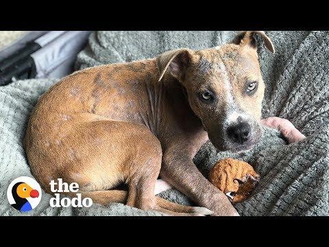 Stray Puppy Found Covered in Ticks Completely Transforms   The Dodo