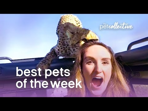 Best Pets of the Week - Safari Close Encounter!! | The Pet Collective