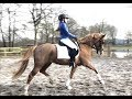 Allround-pony Tallentvolle D-pony