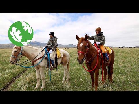 Wyoming: Wild & Working