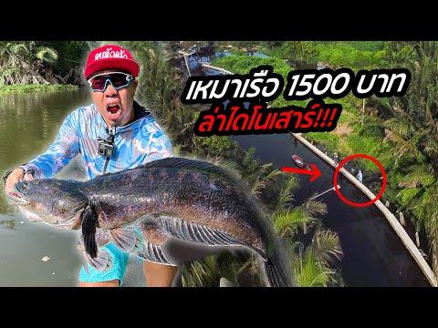 เหมาเรือ!-1,500-บาท-ล่าไดโนเสา