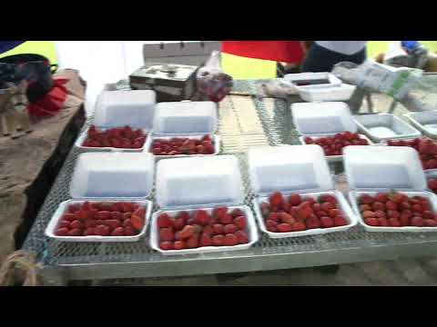 Celebración del bicentenario en la feria del agricultor de Barva de Heredia