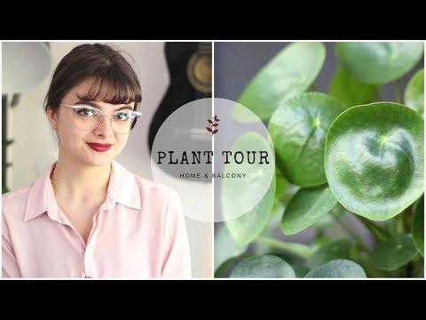 Plant Tour | Home & Balcony