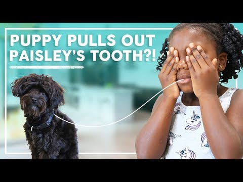 Puppy Ash Pulls Out Paisley's Tooth?! | Behind the Braids Family Vlog Ep.36