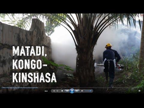 Vi bekämpar gula febern i Angola och Kongo-Kinshasa