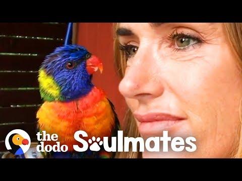 Wild Lorikeet Brings Girlfriend to Meet Human Mom | The Dodo Soulmates