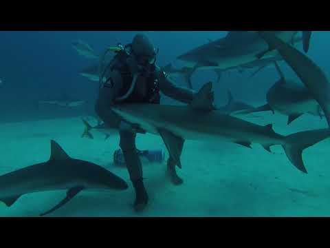 connectYoutube - Marine Biologist Pets Shark in the Waters of Grand Bahama Island