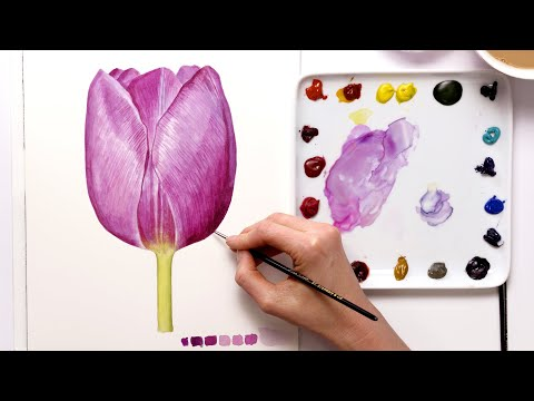 How to paint a realistic tulip in watercolor