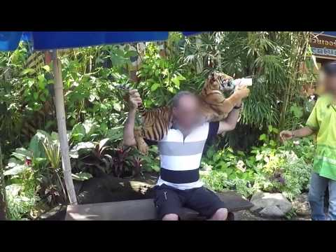 Alesha Dixon undercover with us at a tiger selfie venue