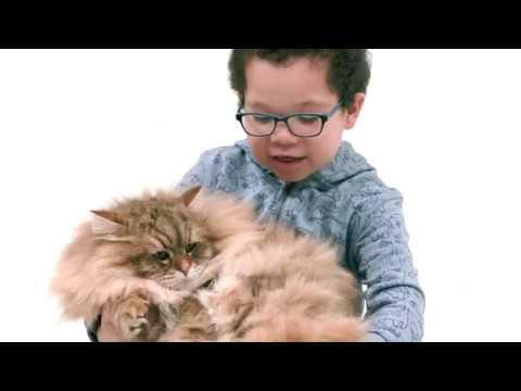 Kids compare rare pets – comparethemarket.com