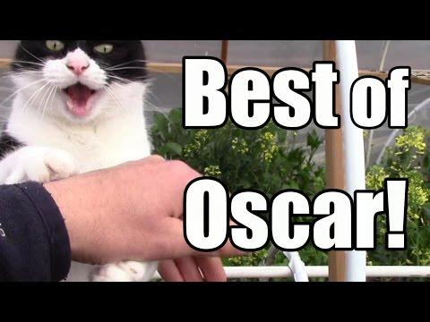 The Best of Oscar The Garden Cat (so far)