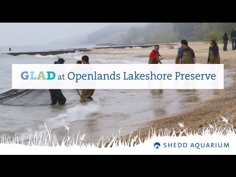 Great Lakes Action Day - Openlands Lakeshore Preserve