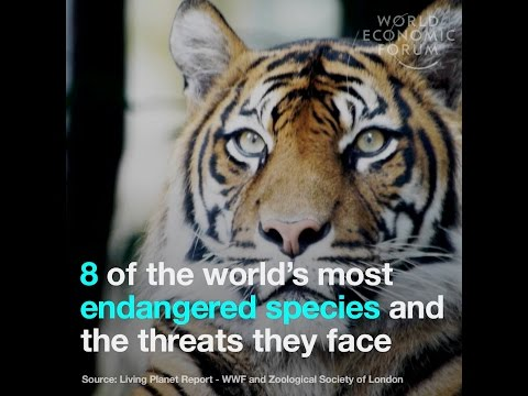 8 of the world's most endangered species and the threats they face