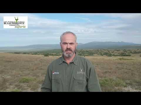 A short message from Blaauwkrantz Safaris