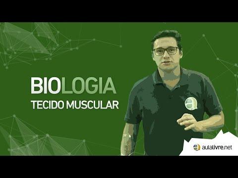 Biologia -Histologia- Tecido Muscular