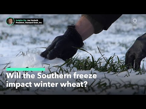 Will the Southern freeze impact U.S. winter wheat crops?