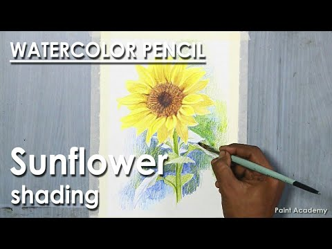Sunflower : Watercolor Pencil Drawing | step by step