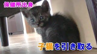 子猫 引き取り『【File.1】保健所から子猫を引き取りました』などなど
