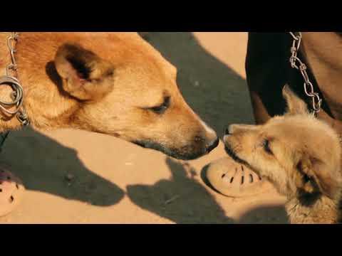 Tollwutkampagne in Malawi: Ein riesen Erfolg für Mensch und Tier