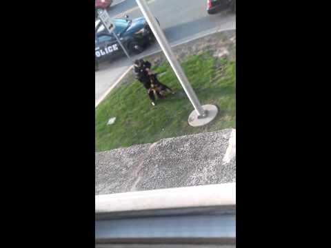 Hammond cop abuses k9 unit