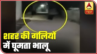 Wild Animals Spotted On Maharashtra Streets | ABP News - ABPNEWSTV