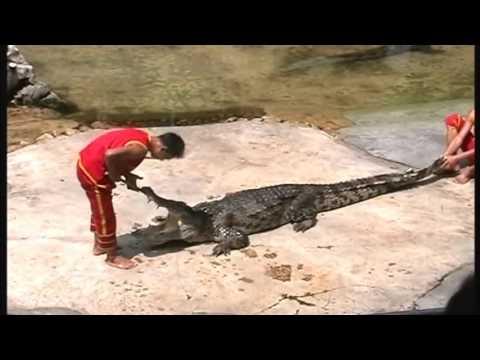 Это не единственное объяснение, к чему снится, как невидимый в мутной жиже крокодил кусает вас.