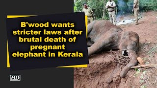 B'wood wants stricter laws after brutal death of pregnant elephant in Kerala - IANSINDIA