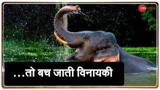 …तो बच सकती थी विनायकी   System Failed Vinayaki   Kerala Elephant Death   Justice For Vinayaki - ZEENEWS