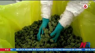 Cannabis medicinal tendrá que esperar