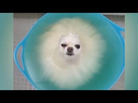 connectYoutube - DO NOT play TRY NOT TO LAUGH, it's so HARD YOU WILL DIE TRYING! - Funniest ANIMAL videos