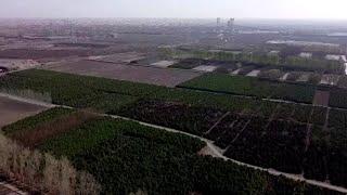 China | Drone muestra proyecto de replantación de árboles en el desierto de Gobi