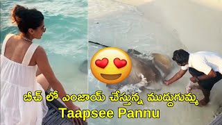 Actress Taapse Pannu Enjoying in Maldives | Latest Video of Taapse Pannu | Rajshri Telugu - RAJSHRITELUGU