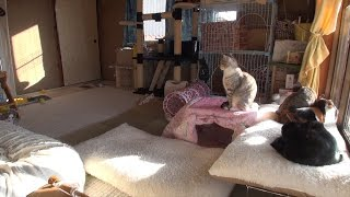 子猫 室温 9月『冬の猫部屋。猫ハウスや猫用こたつの中は何度 Winter of Japan  cat room temperature』などなど