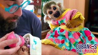 El actor y presentador cubano Alex Otaola presenta a KARMA su nueva hija.