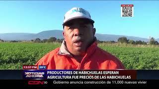 Productores en SJM esperan Agricultura fije precios de las habichuelas