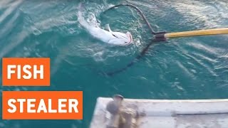 Giant Grouper Fish Tries to Steal Catch | Baby F*cking Wheel