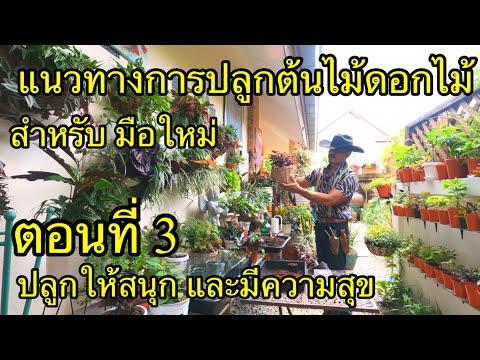 แนะแนวทาง-การปลูกต้นไม้-ดอกไม้