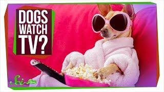 What Do Dogs See When They Watch TV?