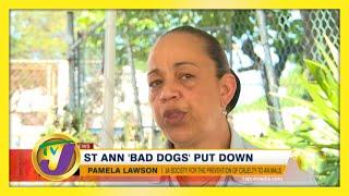 St. Ann 'Bad Dogs' Put Down - November 28 2020