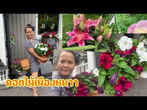 พาชมดอกไม้สวยๆบ้านเพื่อนชีวิตจ