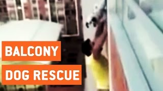 Man Rescues Dog Stuck on Balcony | Dog Rescue