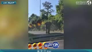 فيل غاضب يهاجم عائلة