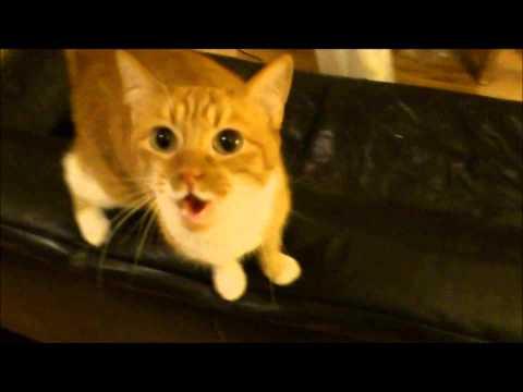 Video: Naujas muzikos stiliu - MiauStepas