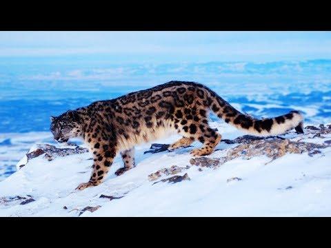 7 Rarest Animals In The World