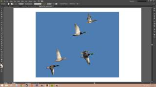 Adobe Illustrator CS6 for Beginners - Tutorial 78 - Converting Image Trace to Paths