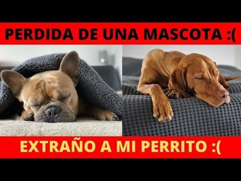 Perdida De Una Mascota - Extraño a mi Perrito :( :(