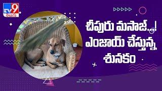 పెంపుడు కుక్కకు మసాజ్ చేస్తున్న యజమాని - TV9 - TV9