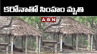 కరోనాతో సింహం మృతి  || Chennai Zoo Park || ABN Telugu - ABNTELUGUTV